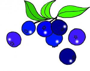 ブルーベリーに肥料をやる4つの時期とその分量、やり方の解説です!