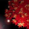 京都の紅葉ライトアップイベント情報!2015年最新情報も更新中!