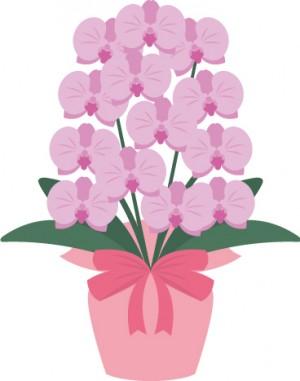 切り花が長持ちする花ベスト5!【長持ちさせるコツ、方法も伝授】