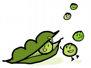 枝豆収穫の目安!おいしく食べるタイミングとコツをお教えます!
