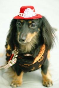 犬 ハロウィン 仮装