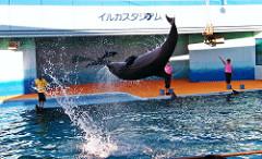 南知多ビーチランド イルカのショー
