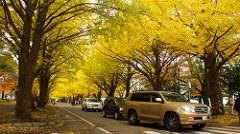 紅葉 北海道のイメージ