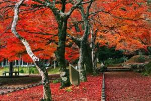 紅葉の色の違いと仕組み用画像