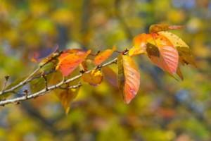 紅葉の種類用2