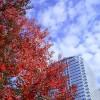 10月,秋の東京の気温と服装。上旬,中旬,下旬別に紹介!