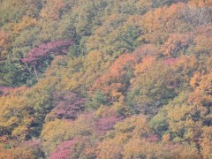 高尾山登山の服装、秋(9月、10月、11月)の注意点!【女子編】