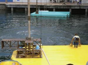 伊豆三津シーパラダイス イルカ海のショー