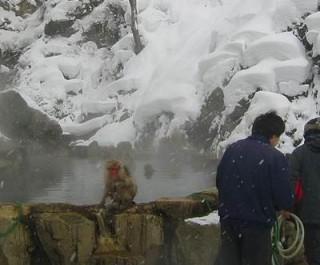 地獄谷温泉で猿を見よう!日帰り旅行、ツアー情報!