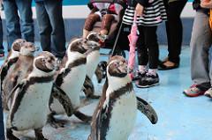 鳥羽水族館 ペンギン