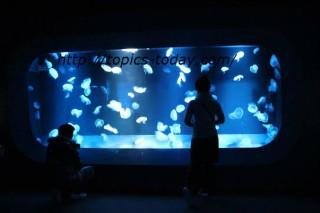 京都水族館 クラゲ