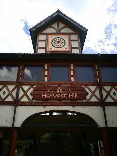 ハーベストの丘